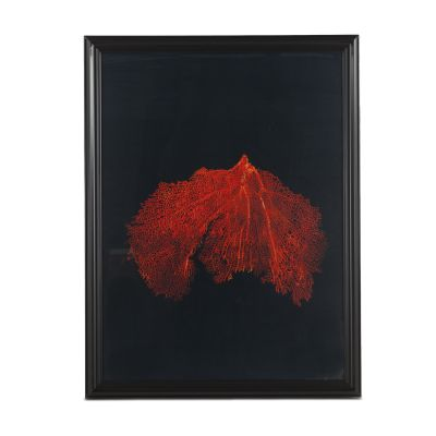 Peinture Wide Red Coral Art Photo
