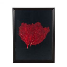 Peinture Red Coral Art Photo